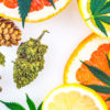 Cannabis Terpenes are Just As Useful as Cannabinoids